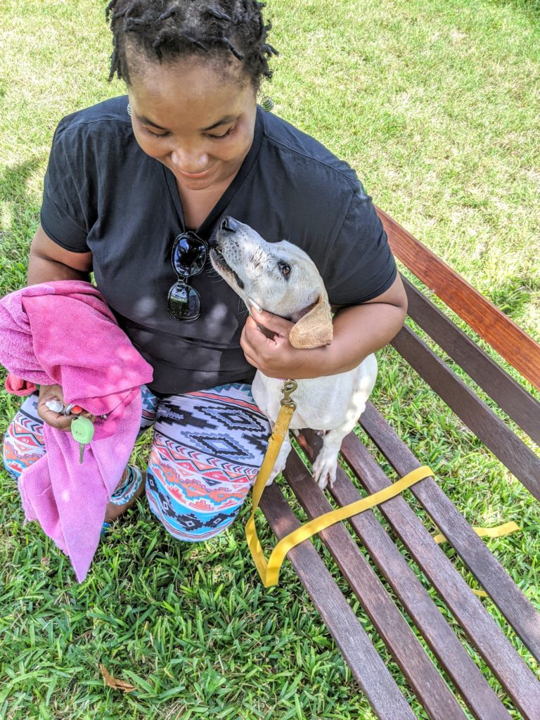 small dog sitting on a bench with handler